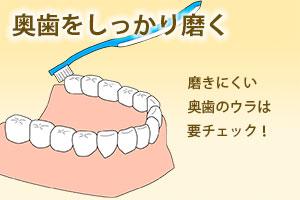 奥歯をしっかり磨く