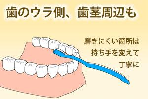 歯のウラ側、歯茎周辺も